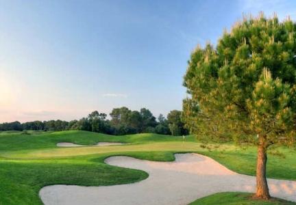 Le bunker et l'arbre du golf de Son Antem.