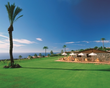 Un palmier du golf de Tecina.